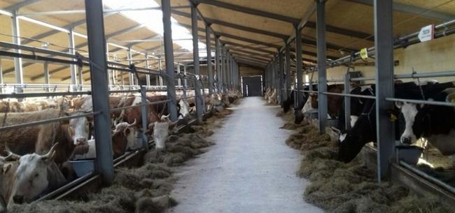 Семейные молочные фермы в тамбовской области